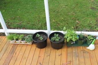 deck herb and strawberry garden