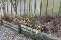 Neglected garden full of dead ladder fern and half dead bromeliads.