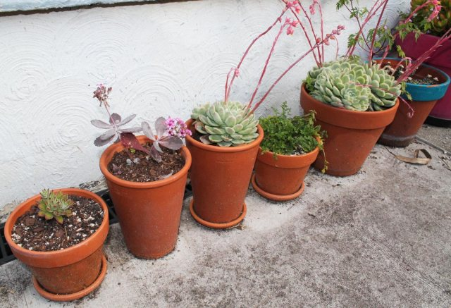 succulents-containers-oct-16