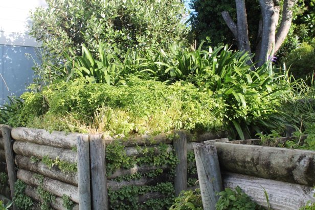Weeds and agapanthus