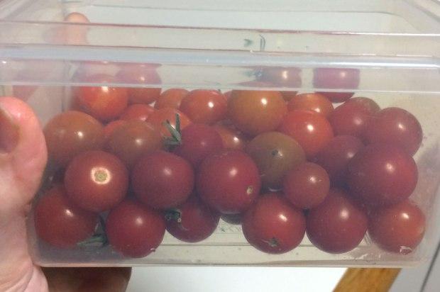 Cherry-Tomatoes-antipodean-garden-03