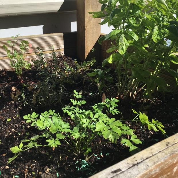 Herb-garden-nz