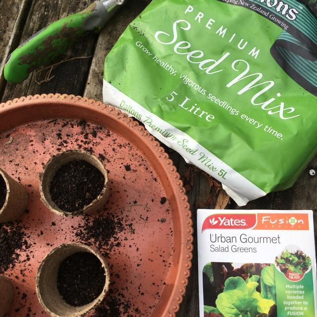 Planting-seeds-salad-greens