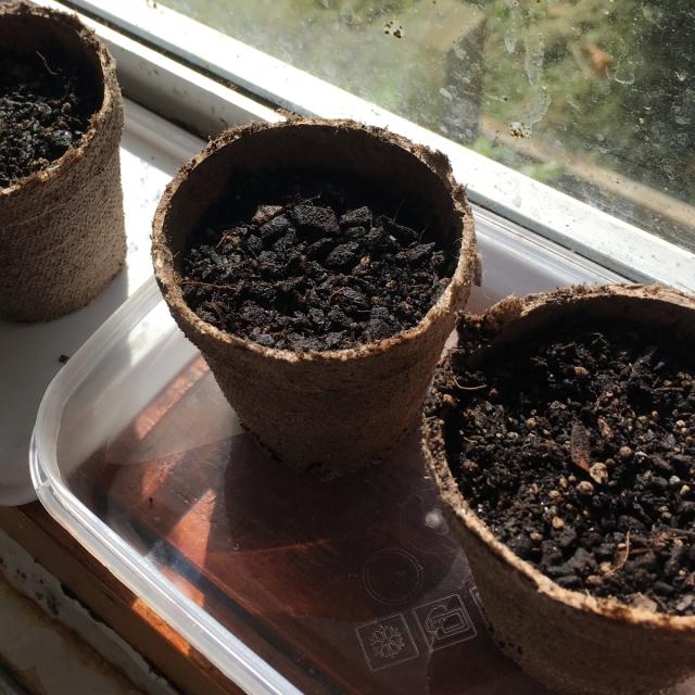 vegetable-seedlings-salad-greens