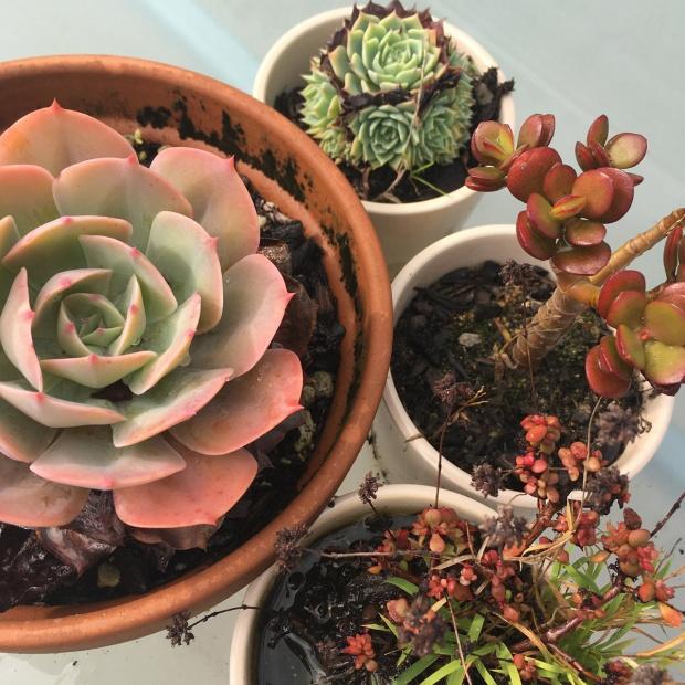 succulents-deck-garden-antipodean