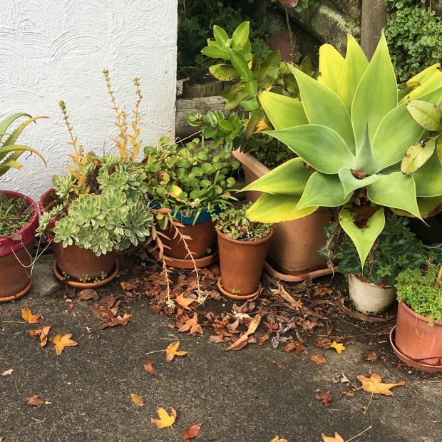 Container-Gardening-NZ