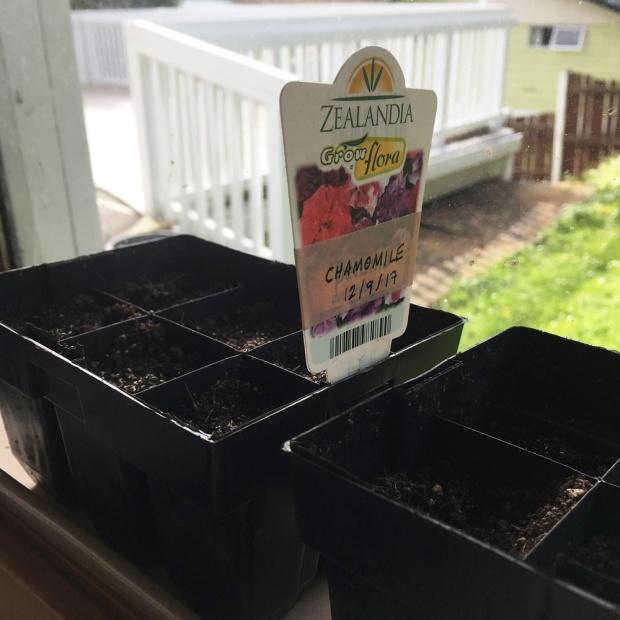 Antipodean-Garden-Chamomile-Seed-Raising