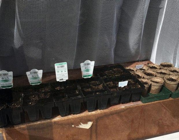 Antipodean-Garden-Seedlings-Seed-Raising-Wildflowers