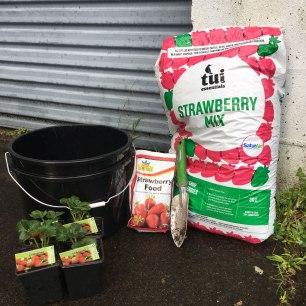 Antipodean-Garden-Straberries-Planting