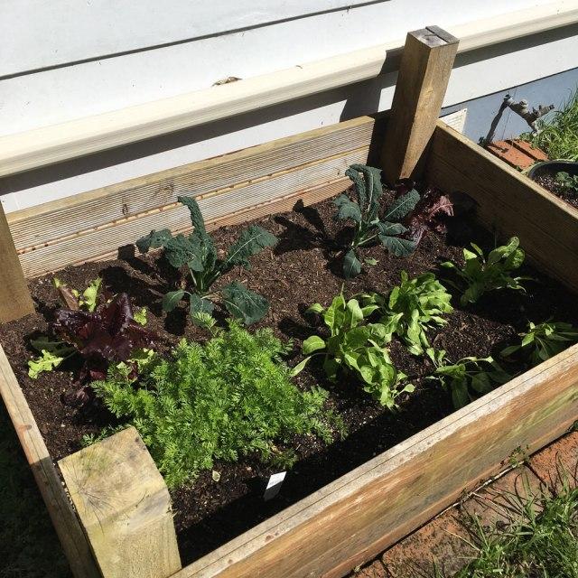 Antipodean-Garden-Vegetables-Carrots-Spinach