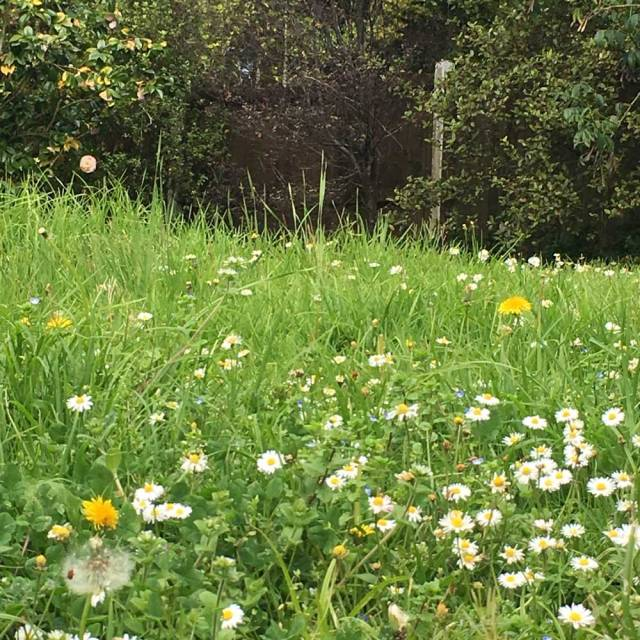 Antipodean Garden Meadow Lawn