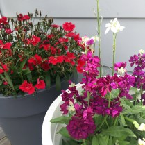 Antipodean-Garden-flowers