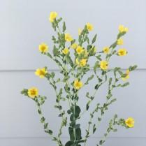 Antipodean-Garden-Spinach-flowers