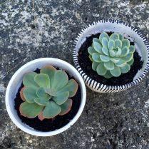 antipodean-garden-succulents-pots